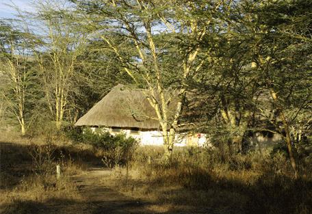 456b_kigio0-wildlife-camp_exterior2.jpg