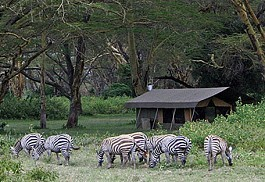 456_nakurutentedcamp_camp_1.jpg