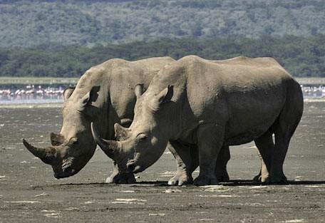 456_nakurutentedcamp_rhino.jpg