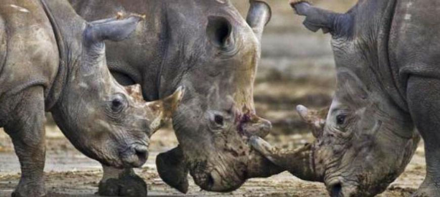 wide-nakru-rhino.jpg