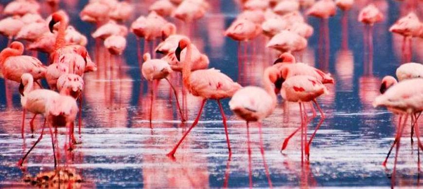 wide-nakuru-flamingo2.jpg