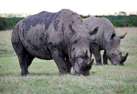 02-rhinos.jpg