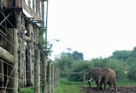 456h_treetops-lodge_elephants.jpg