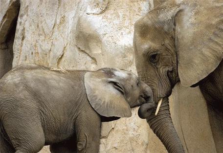 456j_treetops-lodge_elephant.jpg