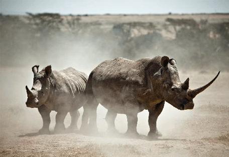 456l_treetops-lodge_rhinos.jpg