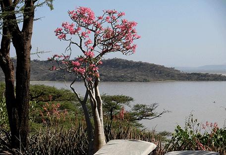 456_lakebaringo_island.jpg