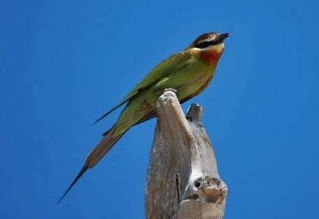 01-bird-life.jpg