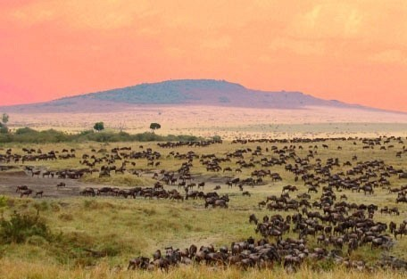 masai-migration-sunset.jpg