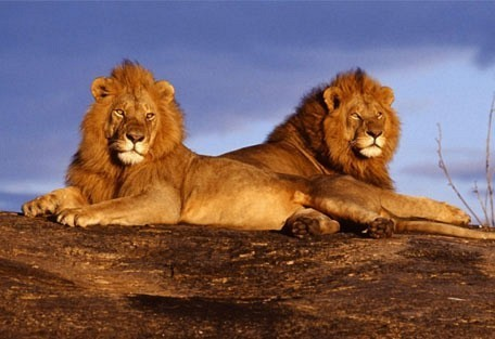 lions_rock.jpg