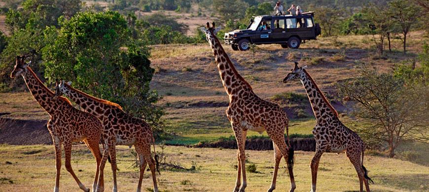 giraffe_drive.jpg