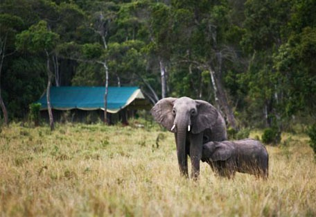 08-elephants-in-the-camp.jpg