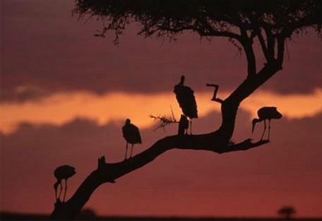 07-evening-with-the-birds.jpg