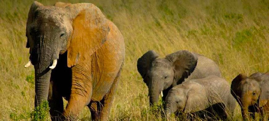 a_Safari-Africa-Elephant.jpg