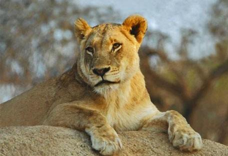 07-lion.jpg