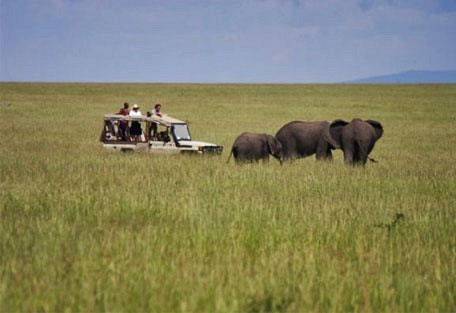 07-game-drive-elephants.jpg