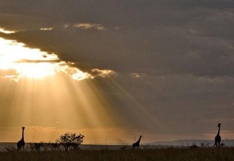 giraffe_silhouette.jpg