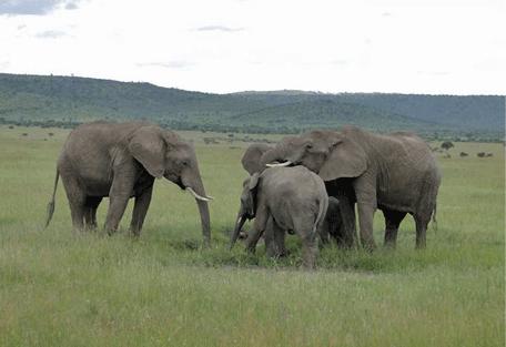 456_sandriver_elephant.jpg