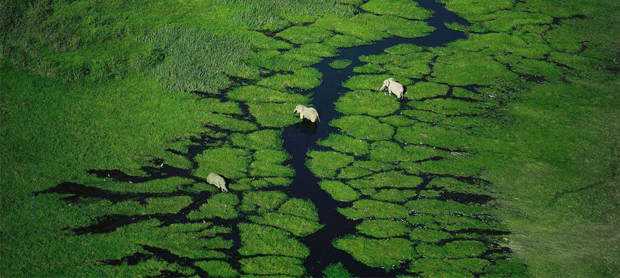 elephant_aerial.jpg
