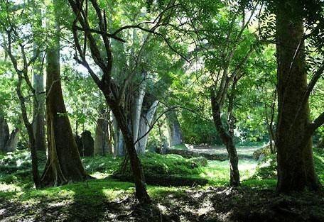 456_mombasa_ruins.jpg