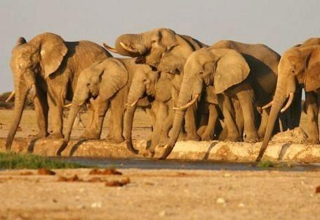 samburu-elephant.jpg