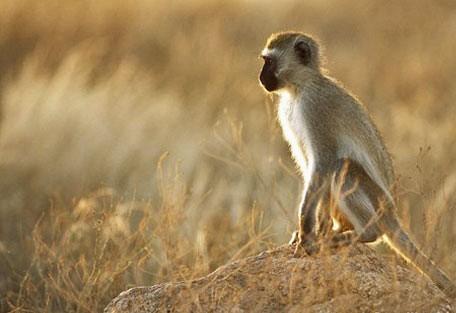 06-monkeys.jpg