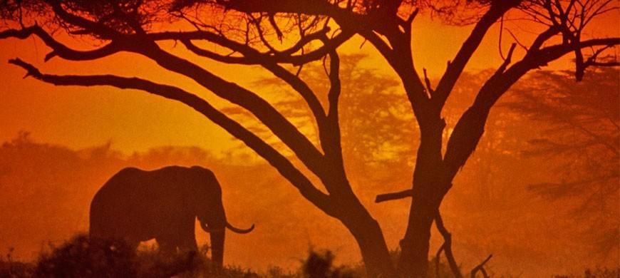 amboseli-national-park-keny.jpg