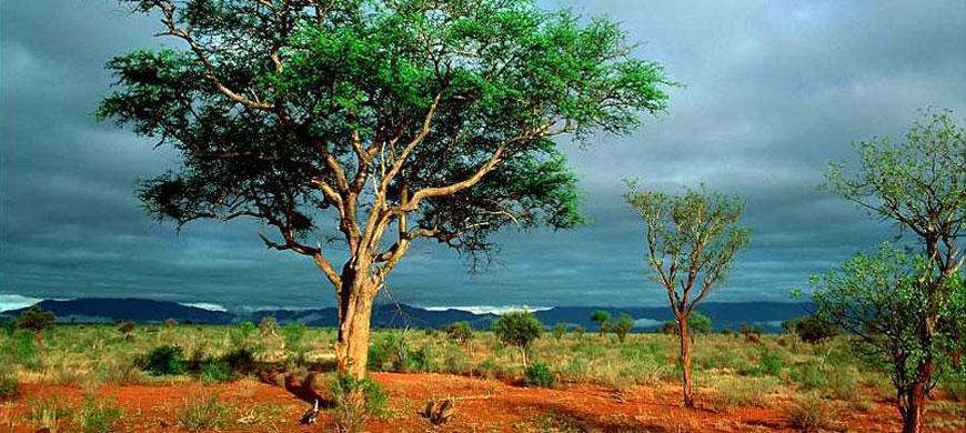 Tsavo-East-National-Park.jpg