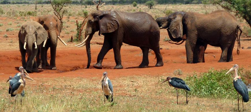 elephants_storks.jpg