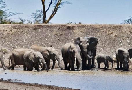kenya-elephant-herd.jpg