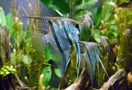 456_lakemalawi_fish.jpg