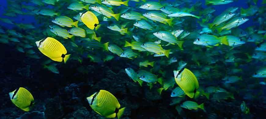 870_malawi_fish.jpg