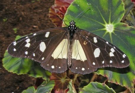 456_zombaplateau_butterfly.jpg