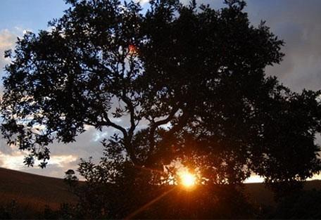 456_zombaplateau_tree.jpg