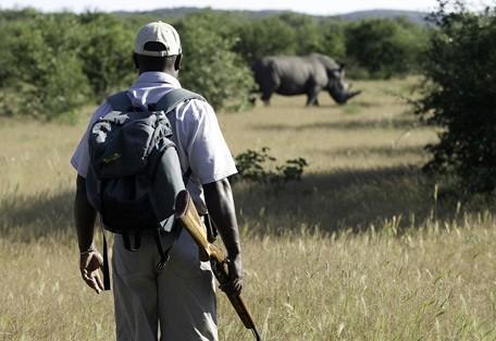 namibia-rhino-walk.jpg