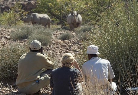 rhino-walk-wilderness.jpg