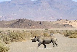 sunsafaris-1-desert-rhino-camp.jpg