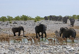elephant-waterhole.jpg