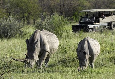 rhino-drive2.jpg