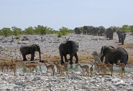elephant-waterhole.jpg