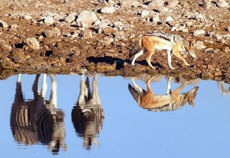 jackal-waterhole.jpg