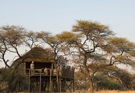 456-1-onguma-tree-top.jpg