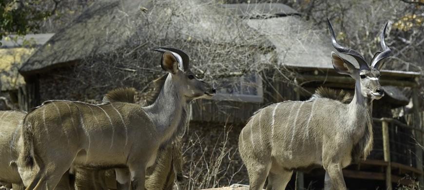 kudu-lodge.jpg