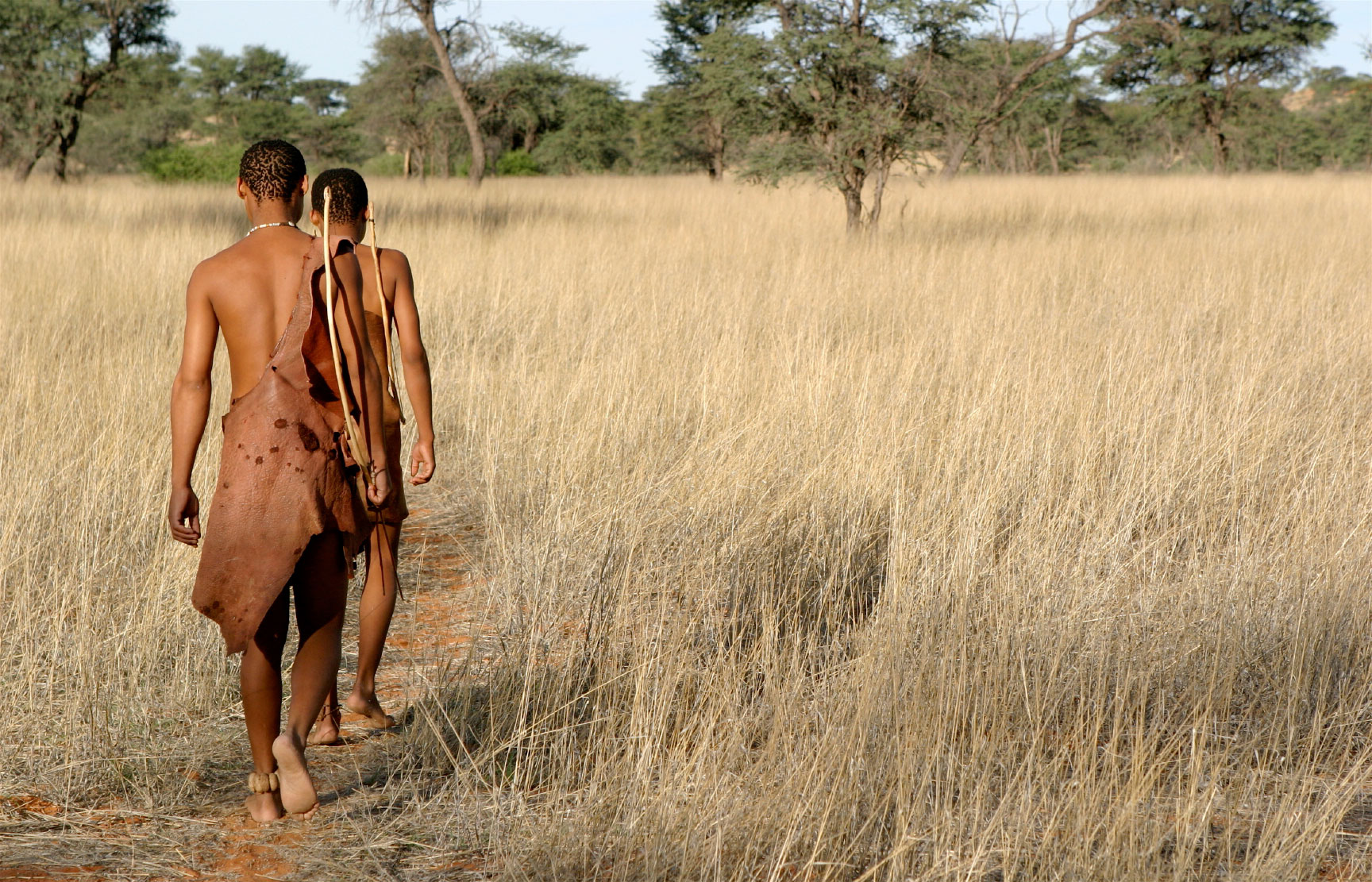 the kalahari Los bosquimanos fueron los primeros habitantes de botsuana expulsados de sus tierras y privados de sus derechos, hoy se resisten a duras penas a la desaparición de.