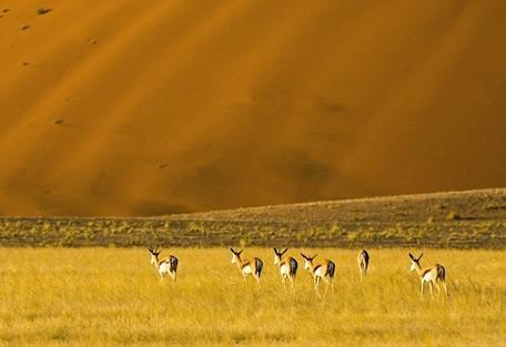 springbok-wilderness.jpg