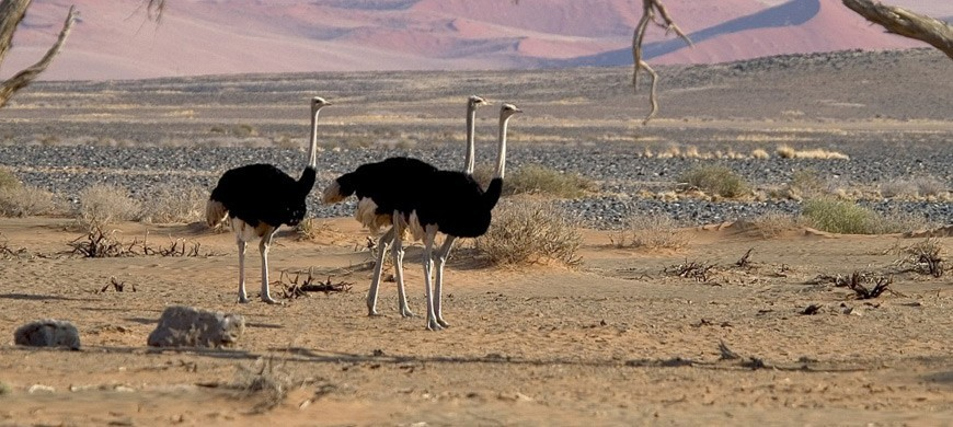 3-ostrich.jpg