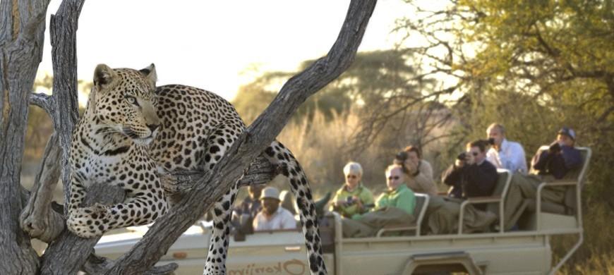 leopard-drive.jpg
