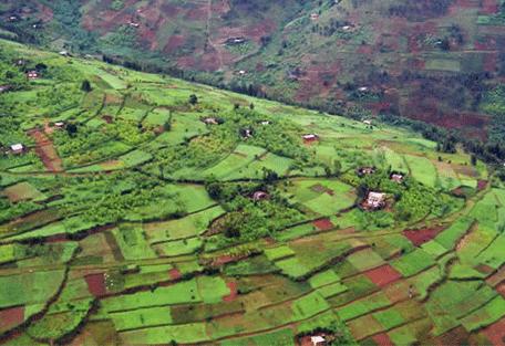 456_kigali_fields.jpg