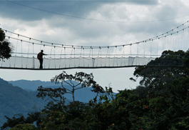 456_nyungwe_bridge.jpg