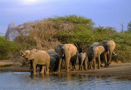 elephant-09.jpg
