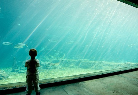 kzn-aqaurum.jpg